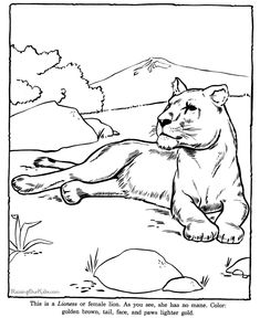 Animal Coloring Pages to Print | Lioness coloring page to print - Zoo animals