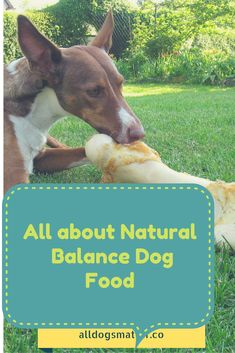 http://alldogsmatter.co/natural-balance-dog-food/