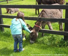 10 Places to Visit in Ireland with Kids. Your entire family will love all of these!