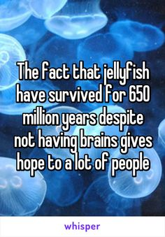 The fact that jellyfish have survived for 650 million years despite not having brains gives hope to a lot of people