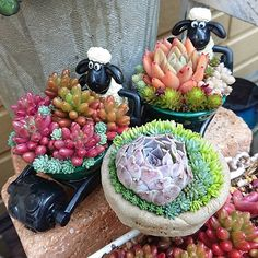 "emi az Instagramon: ""2019.3.20(水)18℃/4℃ * 花粉症がひどくてなかなかお庭に出れないけど、比較的朝マシなうちに( *´艸`)✨ buchiさんのミニミニ鉢カワユイ❤️ ショーンも頑張ってくれてるよ(〃´ω`〃)💕 * #多肉 #多肉植物 #succulent #succulents…"""