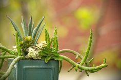 #succulents #cactus #succulentlovers #cactuslovers #minigarden