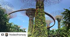 Enig her. Must-see når man er i Singapore. #reiseliv #reisetips #reiseblogger  #Repost @frodeofnorway with @repostapp  If you ever visit Singapore you must spend a day in the amazing Gardens by the bay. #park #garden #nature #ovationoftheseas #comeseek #royalwow #royalcaribbean #instacruise #instatravel #vacation