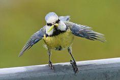 Vroege Vogels: Lichaamstaal van dieren lezen: 5 tips