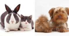 UK-based image library Warren Photographic might specialize in pet photography but what they really stand out for is finding animal brothers from other mothers! Cats and bunnies, guinea pigs and dogs - they all seem related in their adorable image gallery.