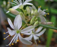 gambar2 tanaman hias