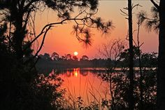 Framed sunrise over the pond (ccammarata3609)