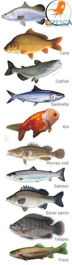 Infografías de peces 17