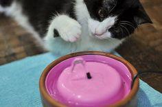 Gostei muito ,meus gatinhos vão adorar.Obrigada por compartilhar.