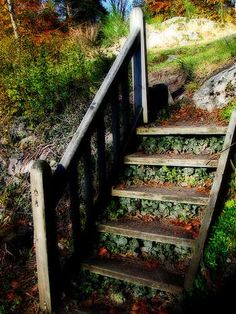 Wooden Outdoor Stairs and Landscaping Steps on Slope, Natural Landscaping Ideas.See the Hen & Chicks in the stairs?