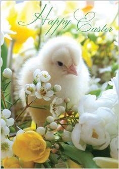 Seasonal » 970 » Easter Chick amongst Flowers - Abacus Cards - Greetings Cards, Gift Wrap & Stationery