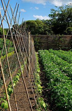 Ewa in the Garden: 14 ideas for bean poles - Inspirational Monday