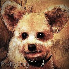 Art picture by Seizi.N pickのお友達ワンちゃんをお絵描きしました、このワンちゃんの名前は?Ted?、とにかく可愛くて以前からお絵描きしてみようと思ってましたが、今回トイプードルで耳のたったワンちゃんは初めて見ました、、だからこのミッキーマウスの様な耳を立てている絵を描きました、絵だからではなく本当に耳が立つみたいです。  Moonlight Chill - Channel Trailer http://youtu.be/X6UexBUYoHQ