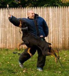 Dog Training - How to train an attack dog. K9-1 Dog Training Style - YouTube