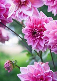 Beautiful Flowers, Flowers, Plants, Garden