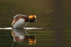 Photo by Henrik Just. Wildlife.