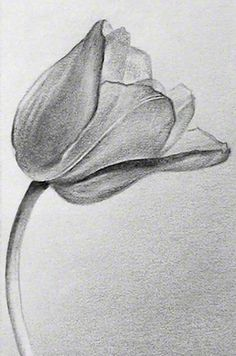 Pencil Drawing Tutorials Flowers For > Pencil Drawings Of Tulips Flower Sketch Pencil, Pencil Drawings Of Flowers, Pencil Shading, Pencil Drawing Tutorials, Flower Sketches, Pencil Art Drawings, Color Pencil Art, Drawing Sketches, Cool Drawings