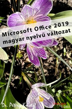 office_2019_magyar Microsoft Office, Books, Plants, Livros, Book, Planters, Libros, Book Illustrations, Plant