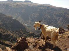 Anhelando las vacaciones: hacer el cabra con @boronfan en La Gomera · Canarias