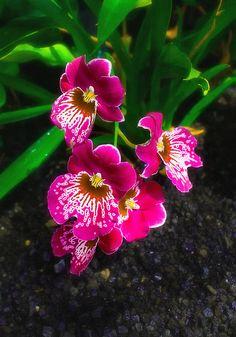 flower-1 | Flickr - Photo Sharing!