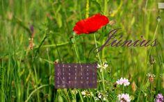 2015. június háttérkép naptár - Masni / Free desktop calendar to download for June 2015