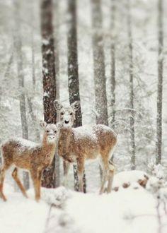 .photos winter