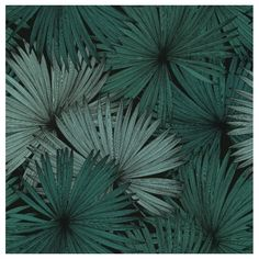 100047818 Coconut from the Caselio Jungle collection. Tropical Wallpaper, Green Wallpaper, Wall Wallpaper, Wallpaper Jungle, Wallpaper Online, Wallpaper Samples, Wallpaper Ideas, Tropical Colors, Tropical Leaves