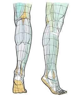 Leg Reference, Drawing Reference Poses, Anatomy Reference, Drawing Poses, Human Anatomy For Artists, Human Anatomy Drawing, Anatomy Study, Human Muscle Anatomy, Drawing Legs