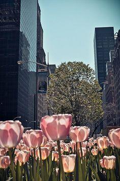 Tulips on Park Avenue.