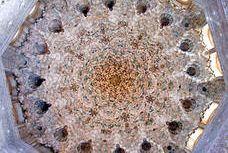 Sala de Dos Hermanas. Alhambra de Granada