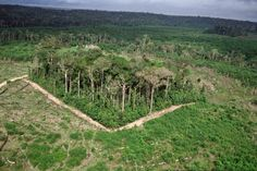 The Biological Dynamics of Forest Fragmentation project is the largest and longest-running ecological experiment of its kind. Beginning in 1980, scientists and ranchers cleared the trees around 11 plots of primary forest in the Brazilian Amazon, creating islands of trees.  Guess what?  Scary reduction in numbers and types of species!