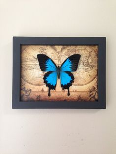 Real Framed Butterfly Home Decor  Insects by AsanaNaturalArts