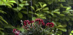 https://flic.kr/p/t5Vb9S | ...schiribizzi di pioggia