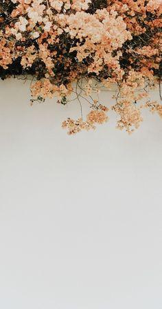 Vintage poppy flower wallpaper - Wallpaper World Tumblr Wallpaper, Wallpaper World, Love Wallpaper Backgrounds, Nature Wallpaper, Wallpaper Quotes, Blog Wallpaper, View Wallpaper, Trendy Wallpaper, Aesthetic Backgrounds