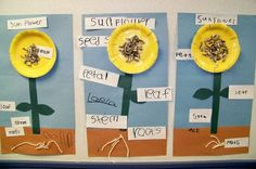 Parts of a Flower from Growing in Pre K