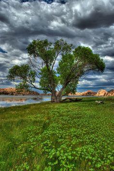 One Tree by Michael Wilson Lone tree along Watson Lake in Prescott, AZ