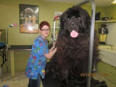 Caucasian Ovcharka, seriously the biggest dog i have EVER seen.... my husband wants one... HAHA