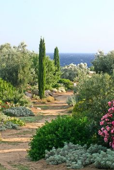 Photos of the 'Valley of the Oleanders' at the seven hectare Parc de Saleccia Botanic Garden at Ille-Rousse in Corsica. Dry Garden, Gravel Garden, Garden Paths, Succulent Planters, Hanging Planters, Succulents Garden, Beautiful Landscapes, Beautiful Gardens, Mediterranean Garden Design
