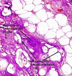 45 Best Histopathology images in 2016 | Microscopic images