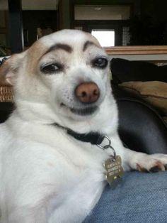 This suspicious dog.