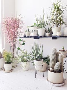 White plants pots for cacti & succulents