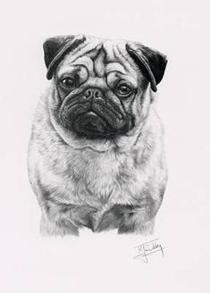 Print of a Pug, by the Dog Artist Mike Sibley