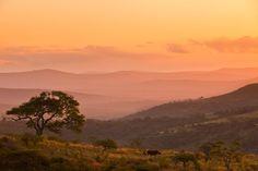 Nashorn-Wilderei: Sterben für ein bisschen Horn | Wissen | ZEIT ONLINE