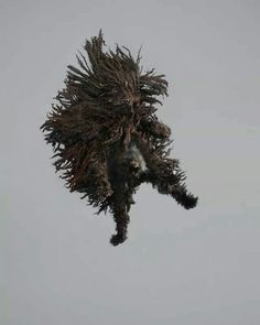 Black Puli -Julia Christe's freestyle series captures leaping dogs in mid-air Funny Dogs, Cute Dogs, Hungarian Puli, Puli Dog, Jumping Dog, Flying Dog, Julie Christie, Herding Dogs, Dog Diapers