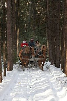 Let's take a sleigh ride through the snow! -- I don't know if this is Mackinaw Island, there isn't much snow, but it does bring back memories of a Christmas holiday. Fly onto the island in winter and this is your transportation into town. Winter Szenen, I Love Winter, Winter Magic, Winter Christmas, Christmas Scenes, Christmas Time, Christmas Vacation, Winter Travel, Family Christmas