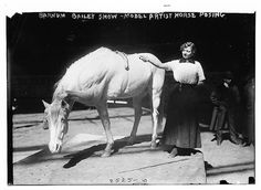 Barnum-Bailey Show - Model Artist Horse Posing (LOC) by The Library of Congress, via Flickr