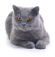 Gato. — Imagem de Stock #8156020