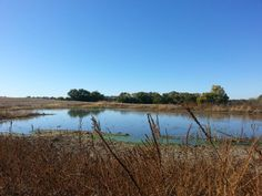 Same pond midday. I love living in the country.