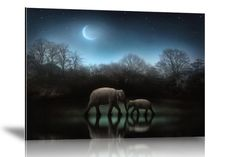 """""""The elephants at midnight"""" Photographer: Jenny Woodward - Art photograph in limited edition"""