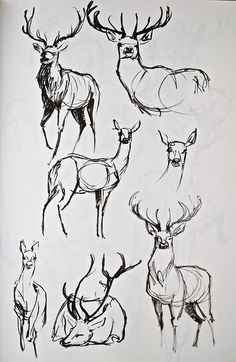 deer tattoo sketches / ideas